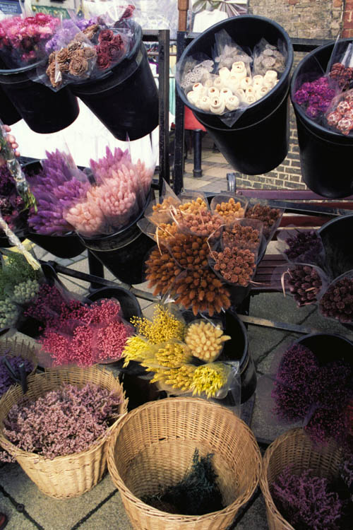dried_flowers_warm_wrk