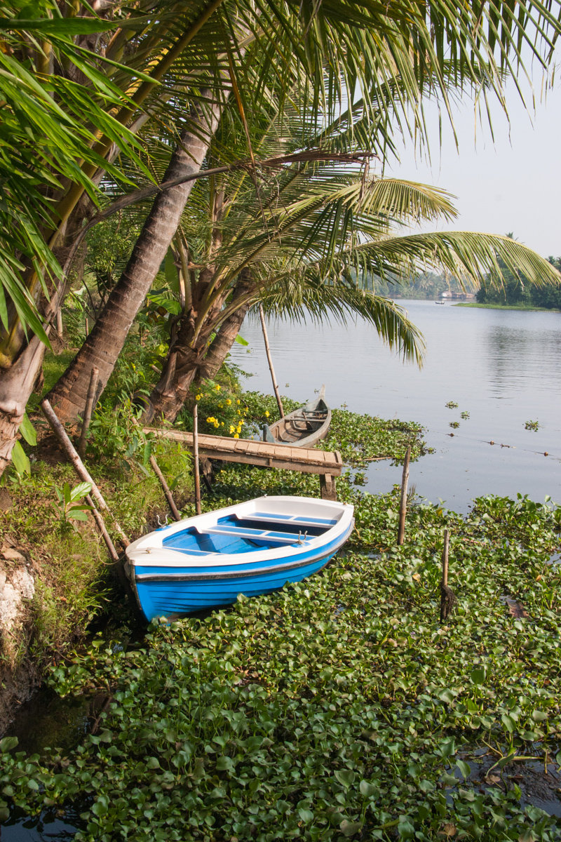Boats and Water Hyacinths