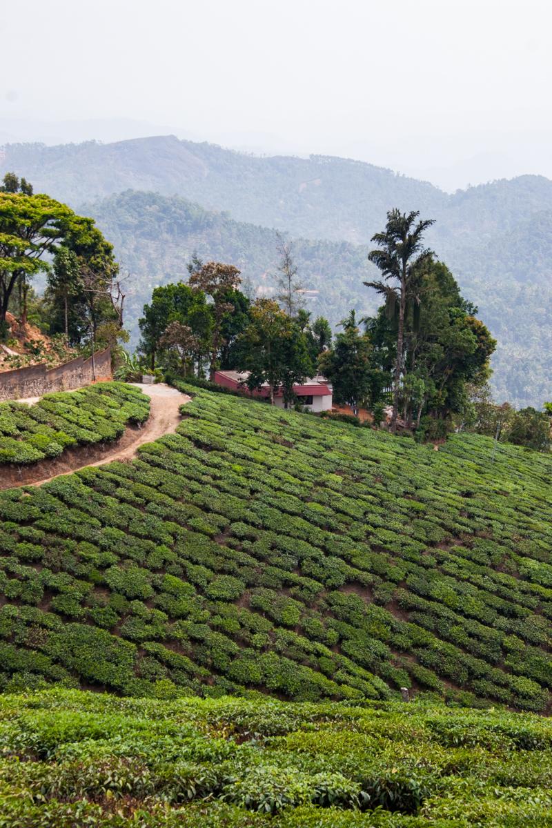 Hillside Tea Garden