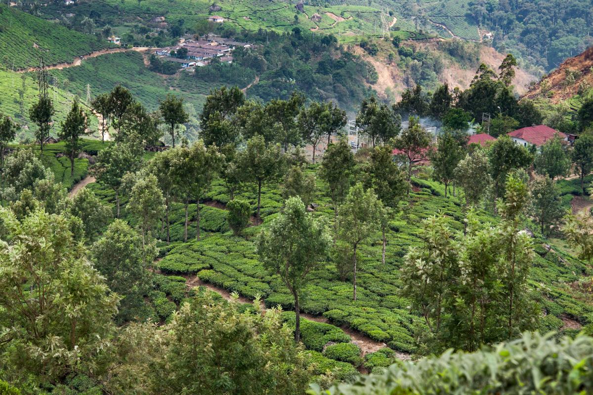 Tea Garden with Trees