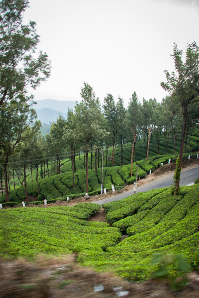 Tea Garden from the Van 2