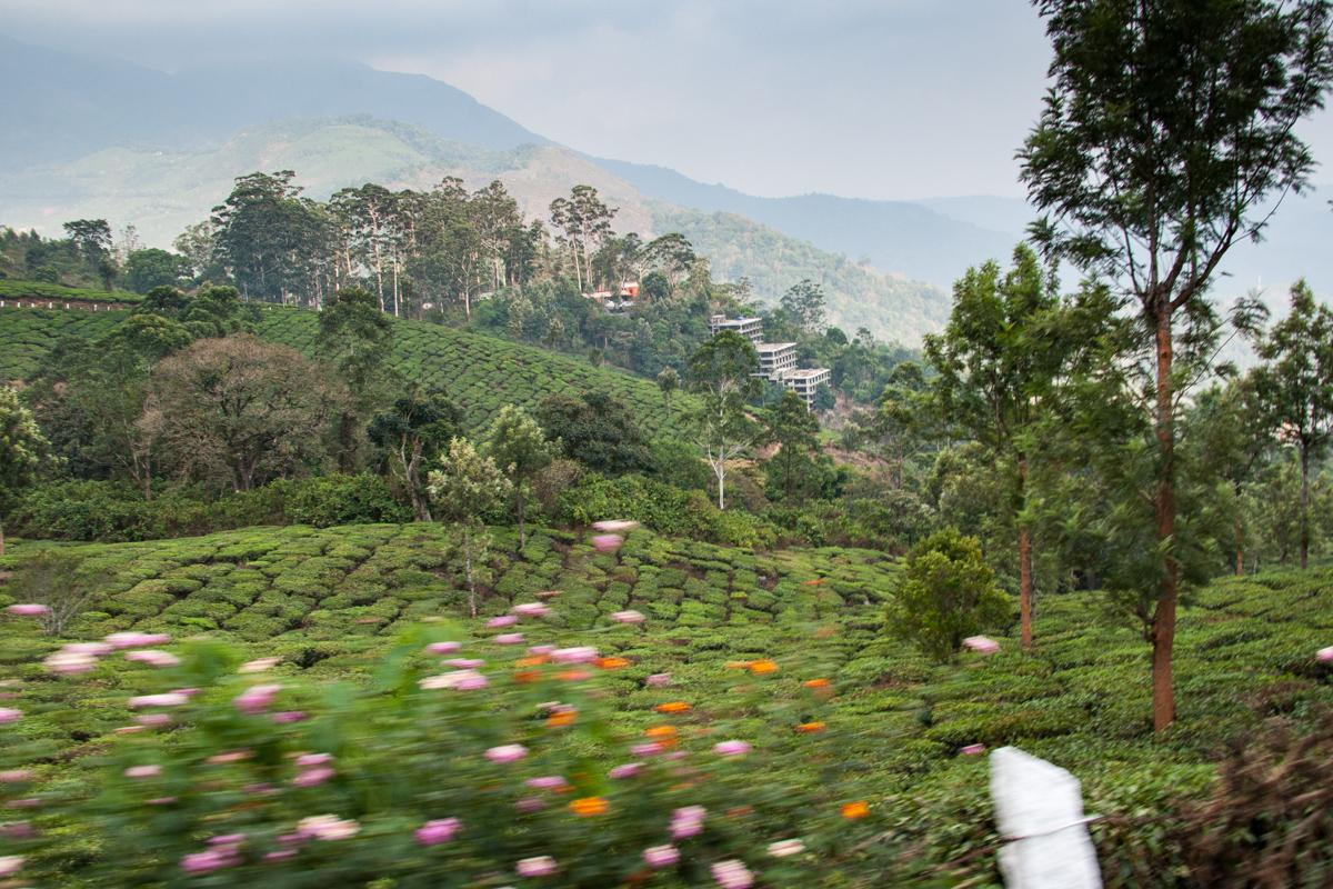 Tea Garden from the Van 3