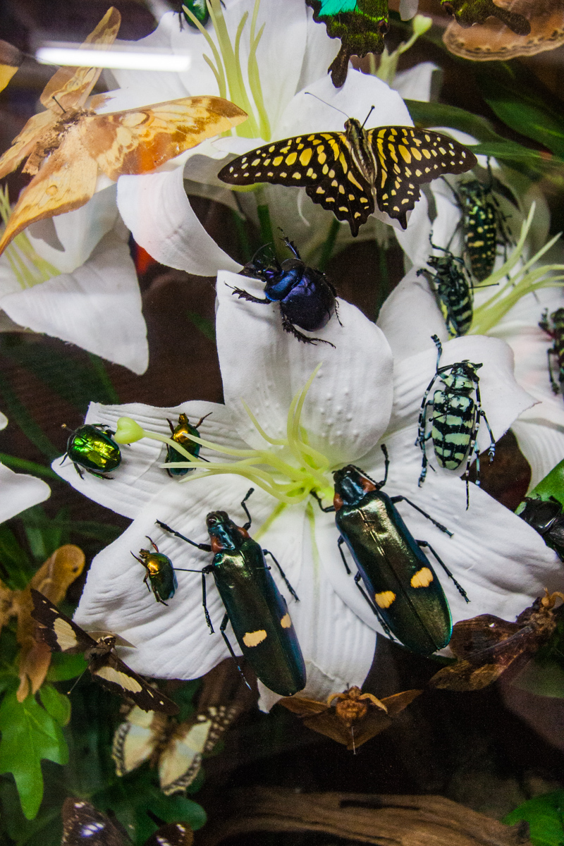 Beetles and Butterflies