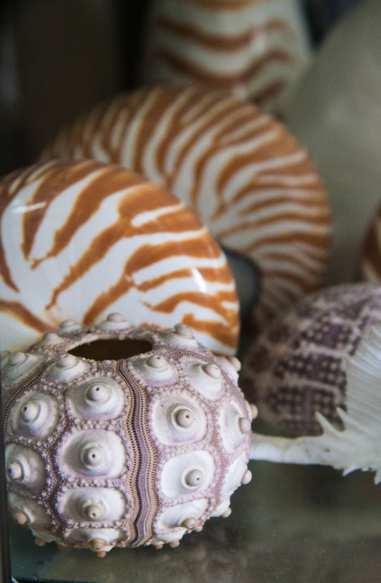 Nautilus and Sea Urchin