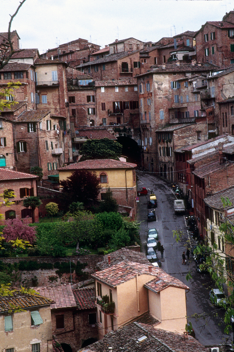 Siena Scene