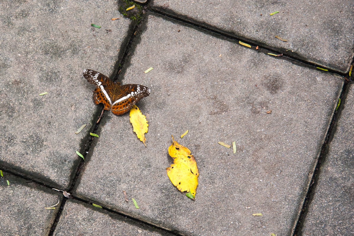 Butterfly on a Grid