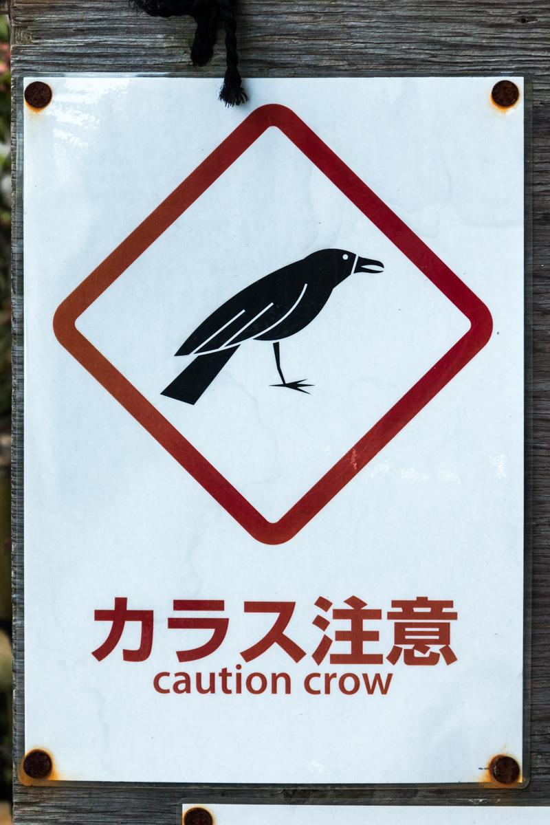 Caution Crow