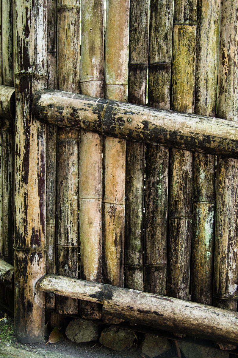 Weathered Bamboo Fence