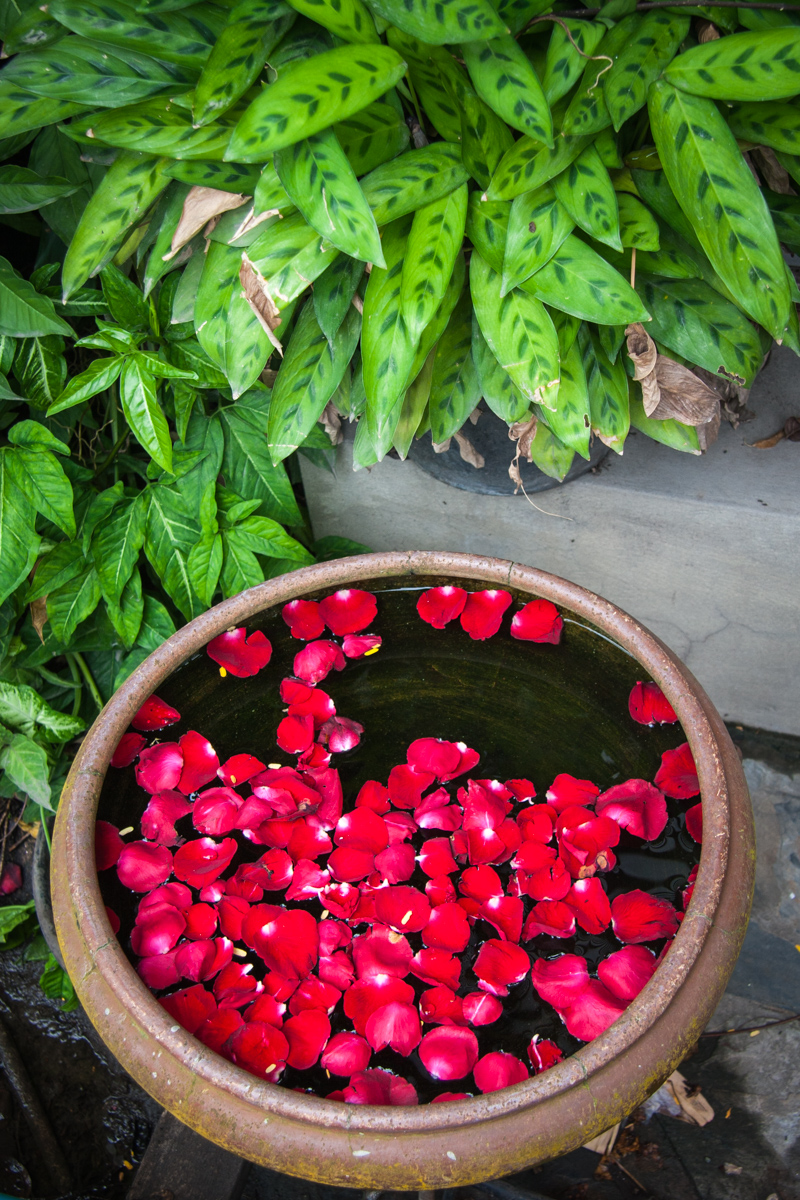 Water Bowl with Rose Petals