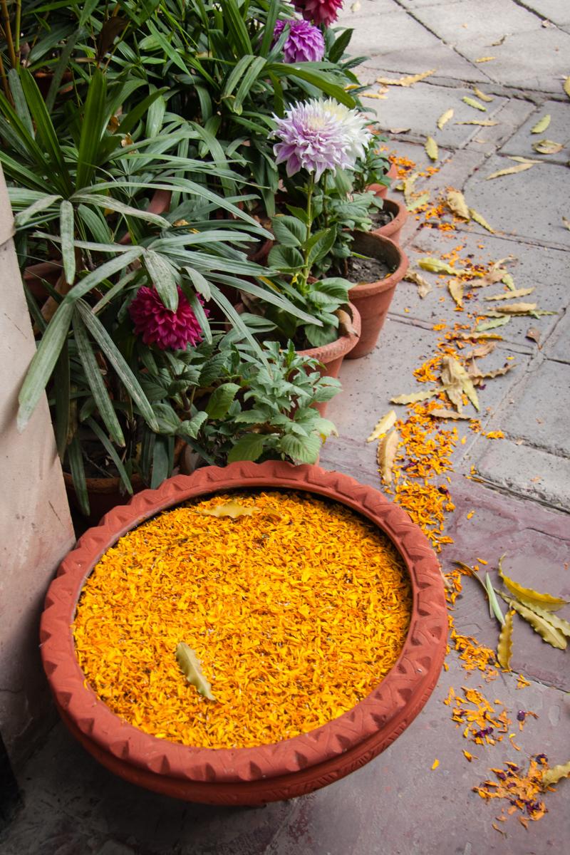 Marigold Bowl