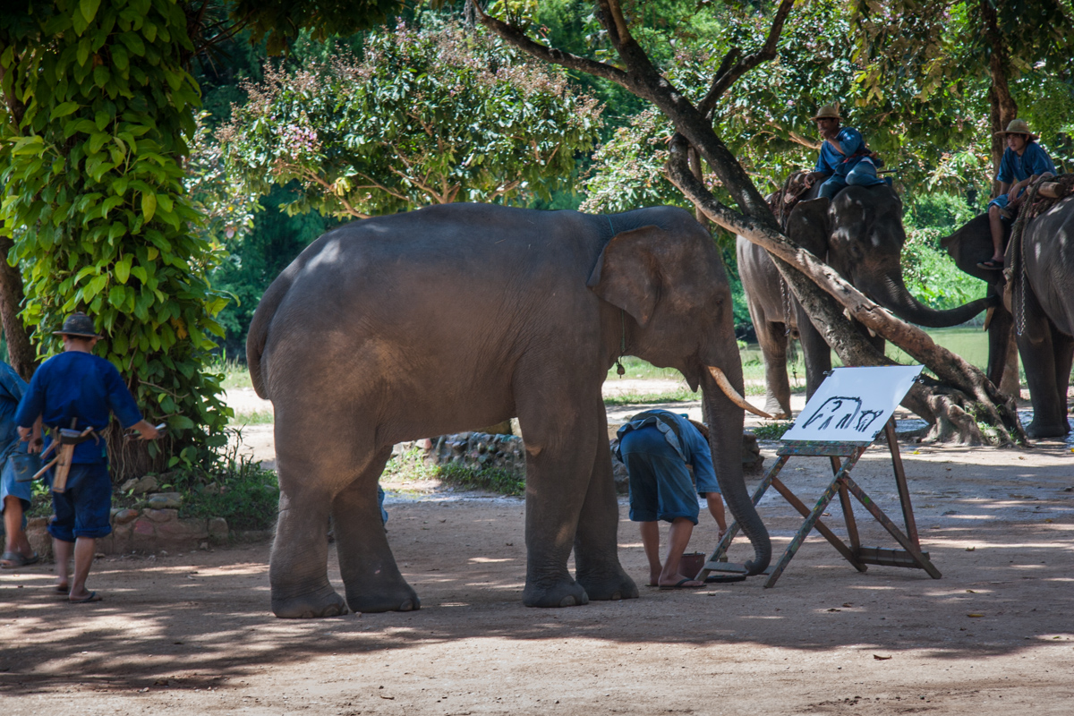 Elephant Getting Ready to Paint