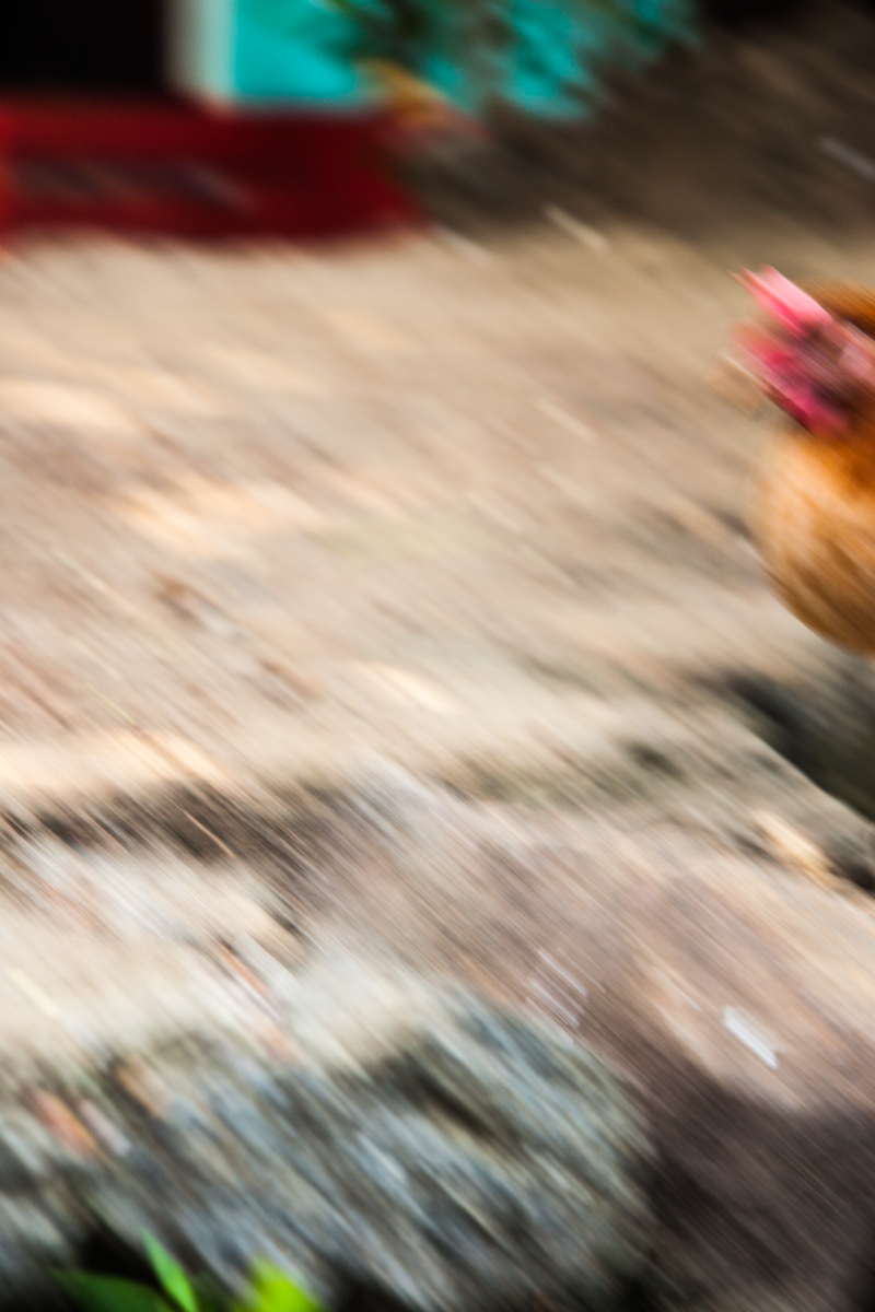 Chicken On the Move