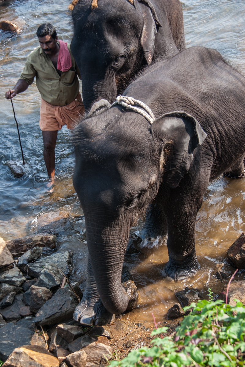Baby Elephant Exiting the Water