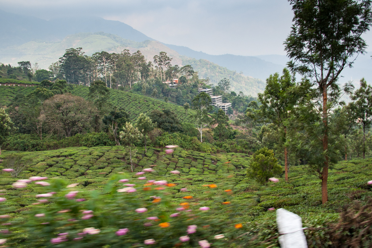 Tea Garden from the Van 3