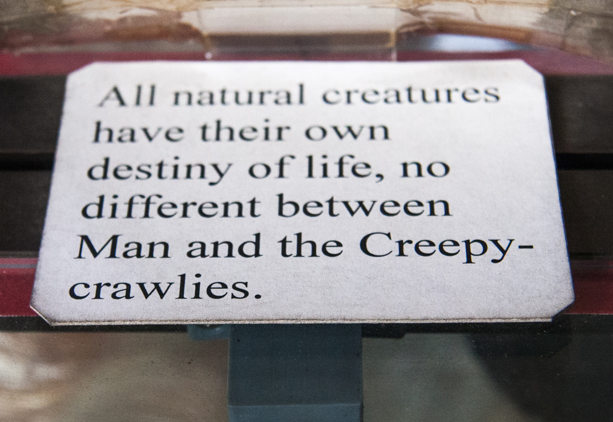 Destiny of All Creatures