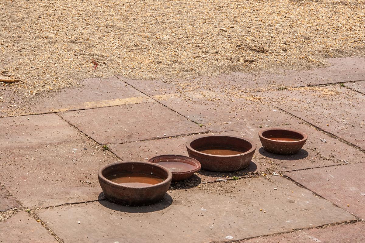 Watering Bowls