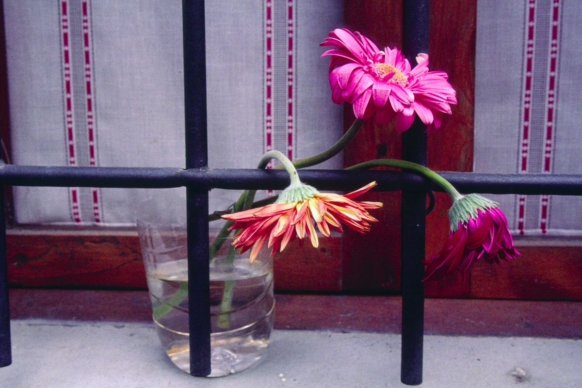 Flowers and Bars