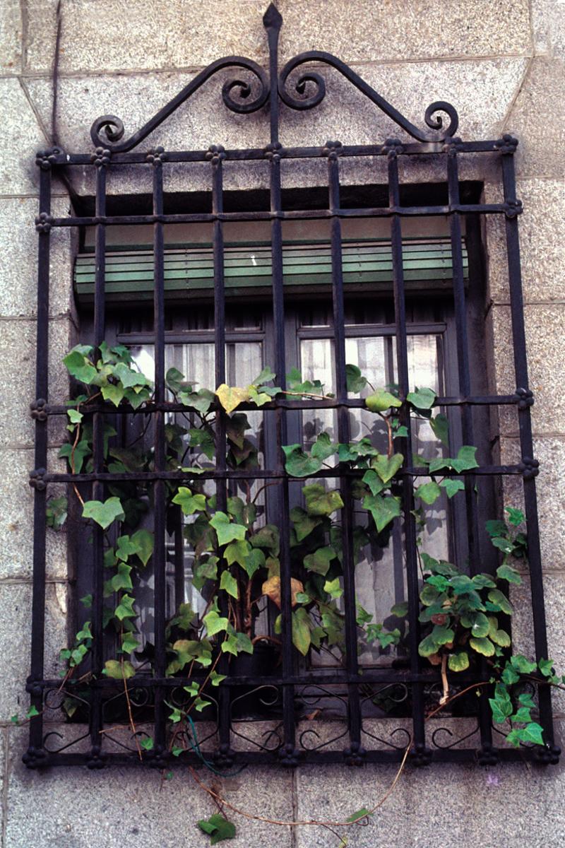 Ivy Bars