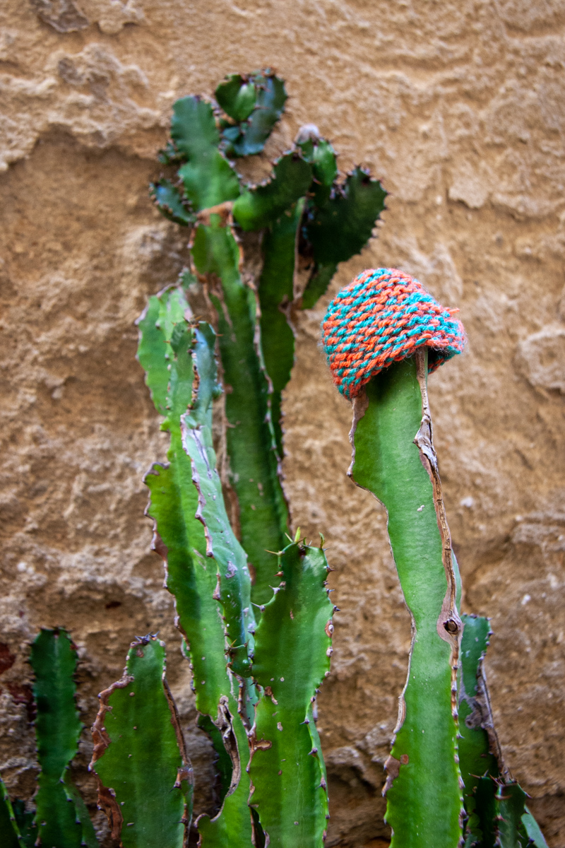 Cactus Cap
