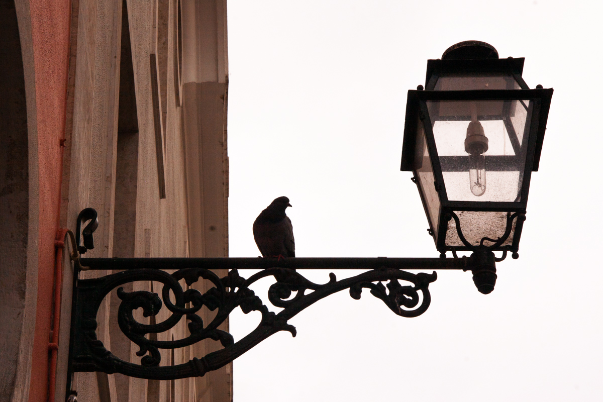 Pigeon and Lamp