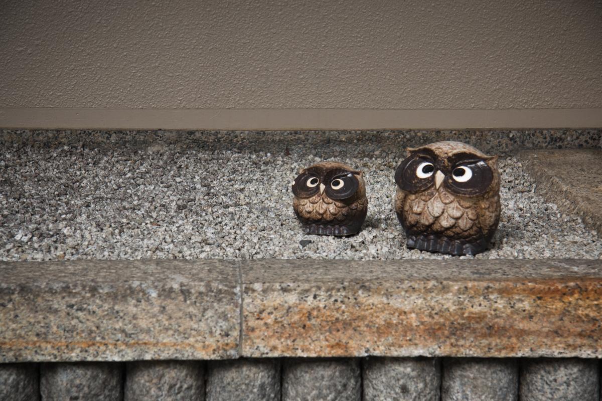 Driveway Owls