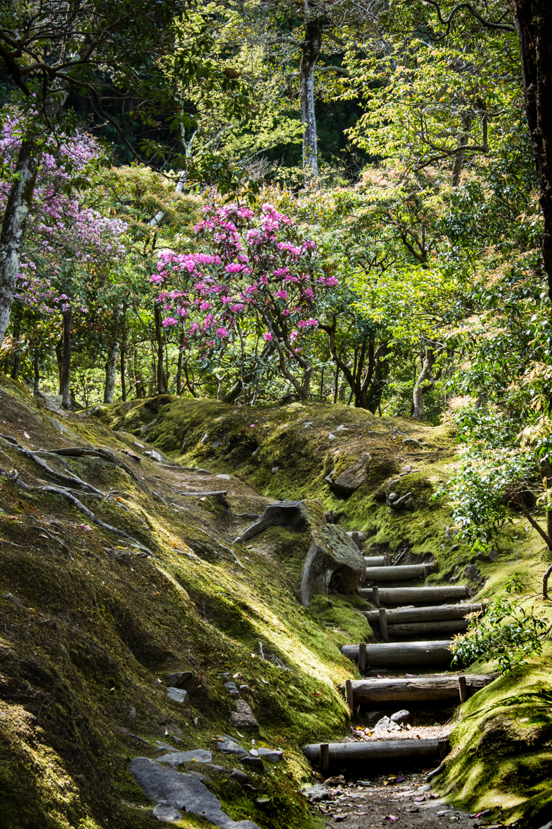 Moss, Steps, and Azaleas