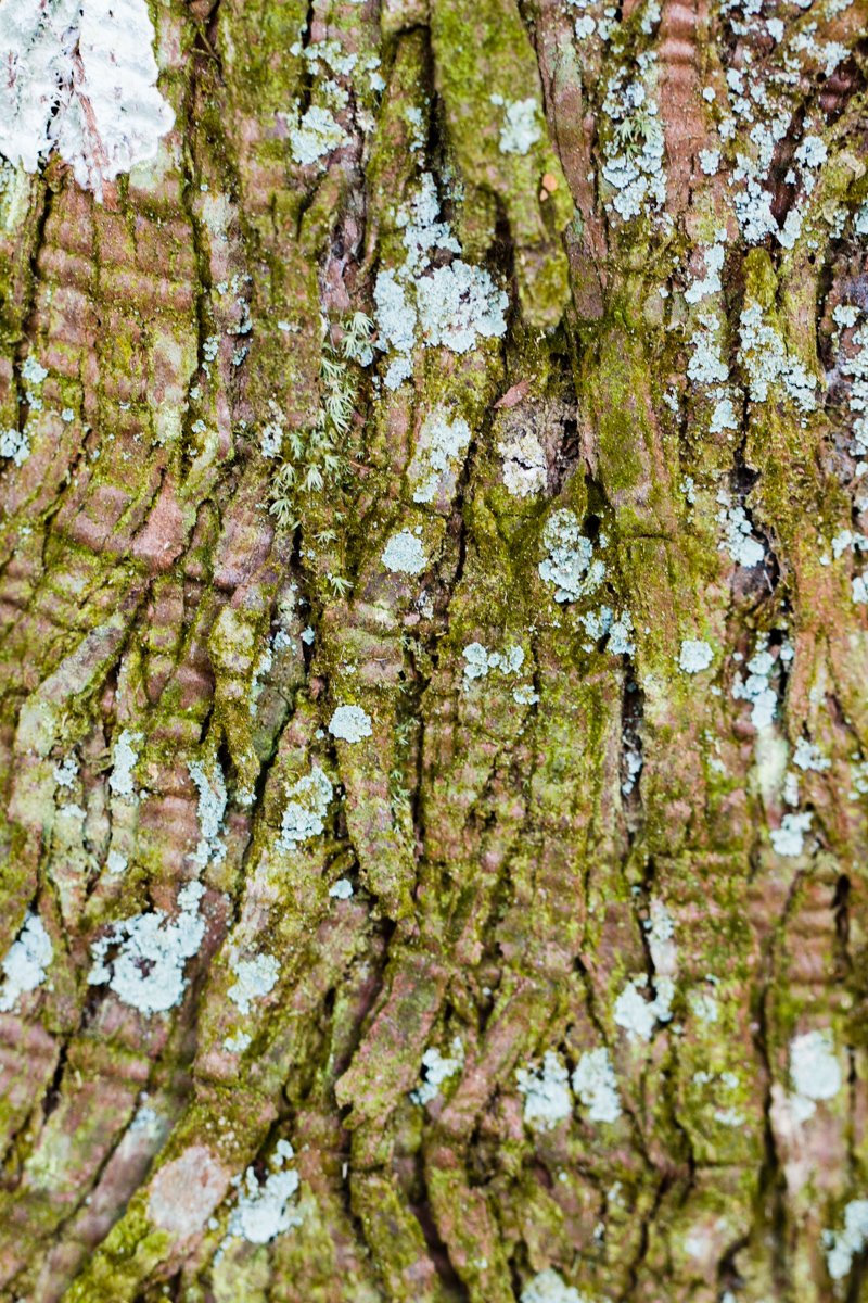Bark with Moss and Lichen