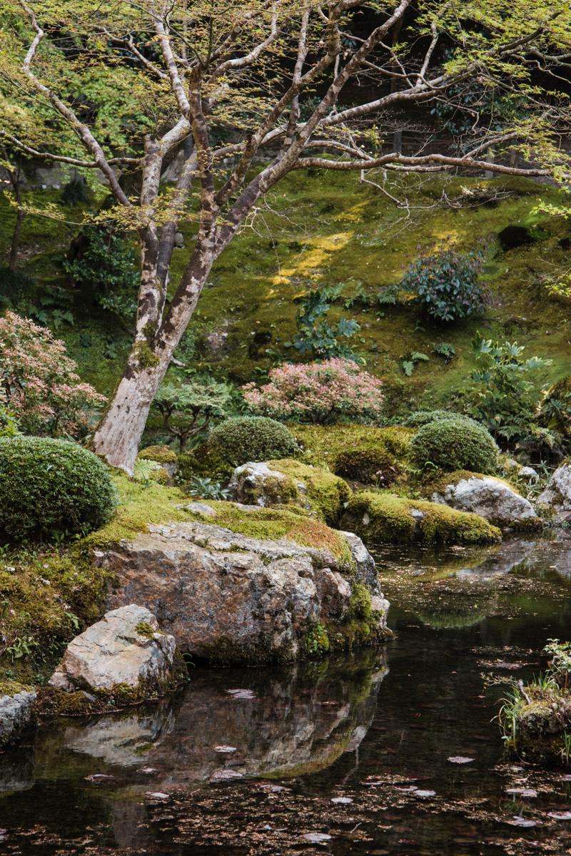 Mossy Hillside