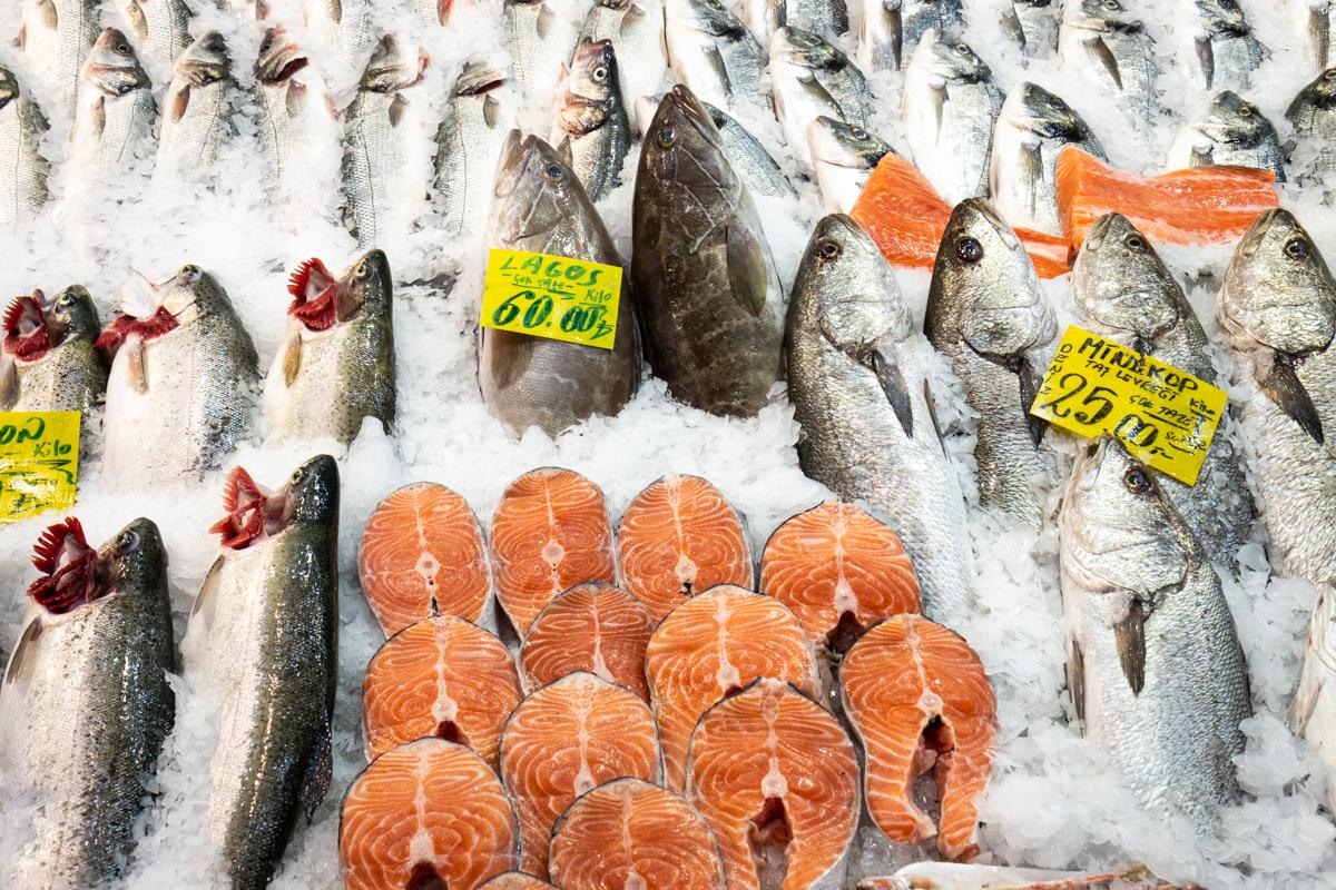 Salmon, Grouper and Rock Seabass