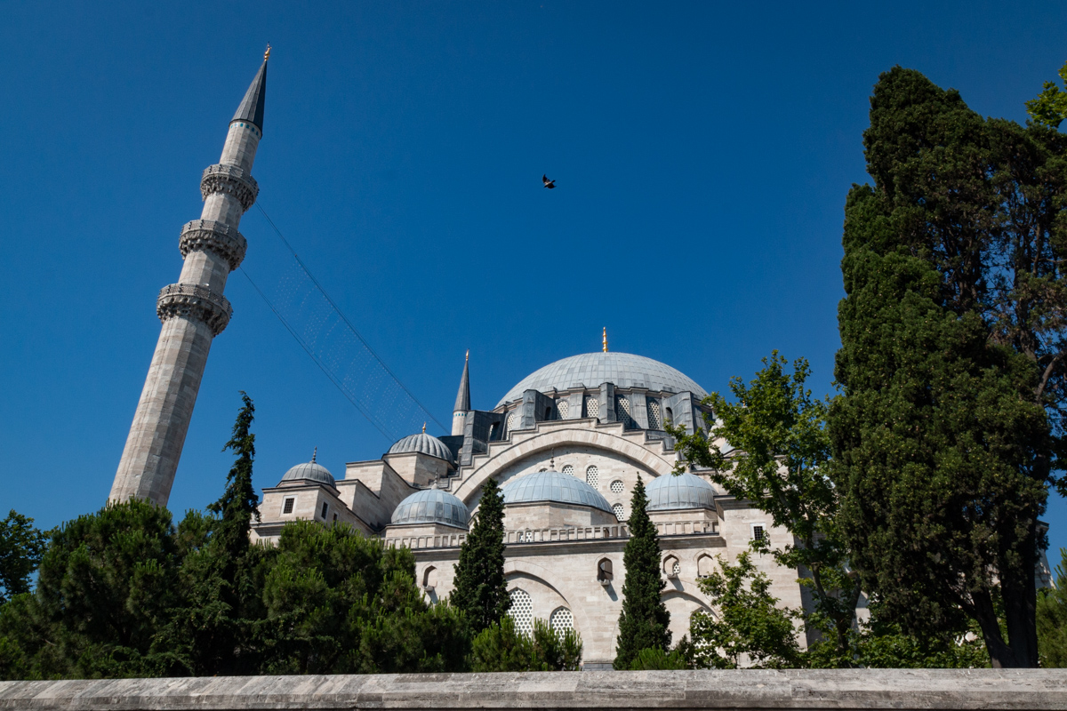 Mosque, Minaret, and Pigeon