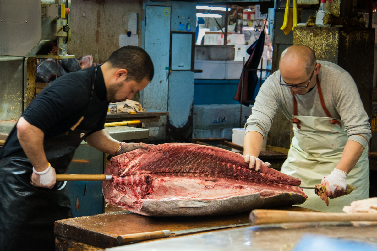 Butchering Giant Tuna
