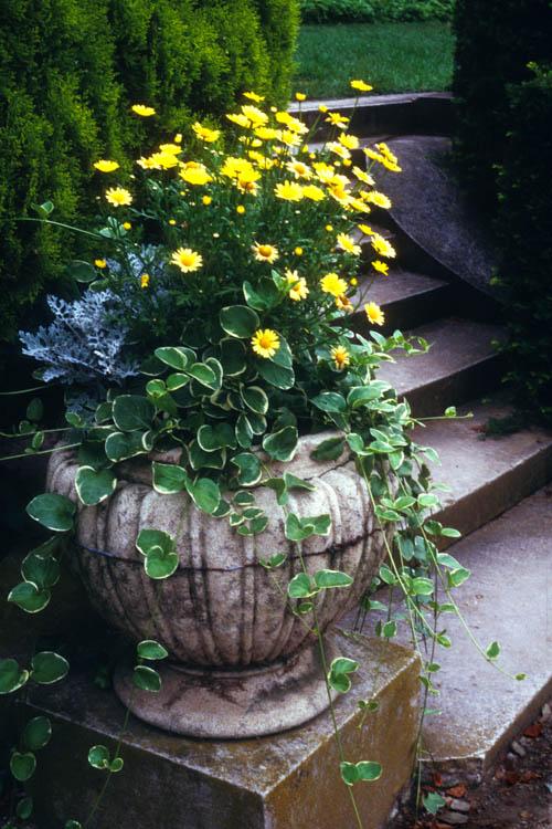 urn_yellow_daisies.wrk