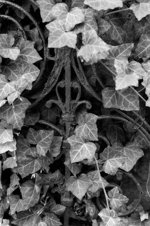 leafy_scroll.wrk