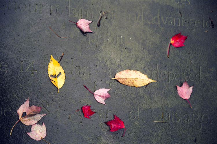 wet_stone_and_leaves.wrk