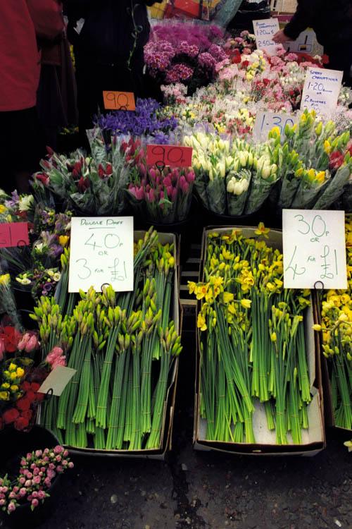 daffodil_stall_wrk