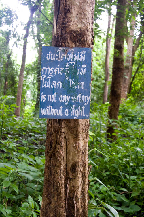 Signs in the Forest
