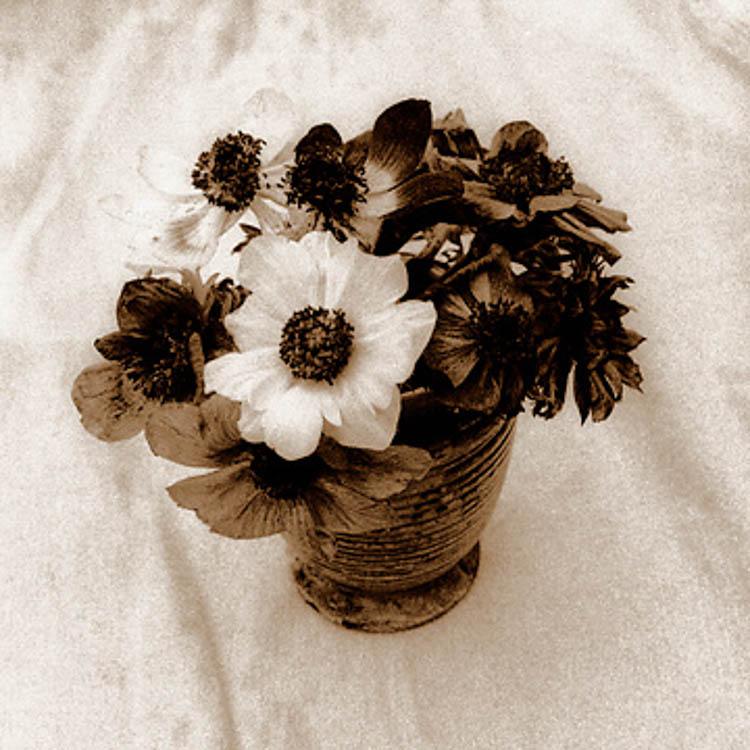 anemones_handcolor_BW_Lith